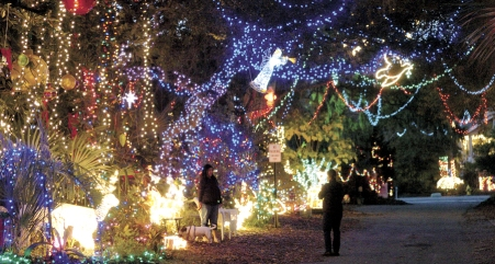 Image result for dove street festival of lights hilton head